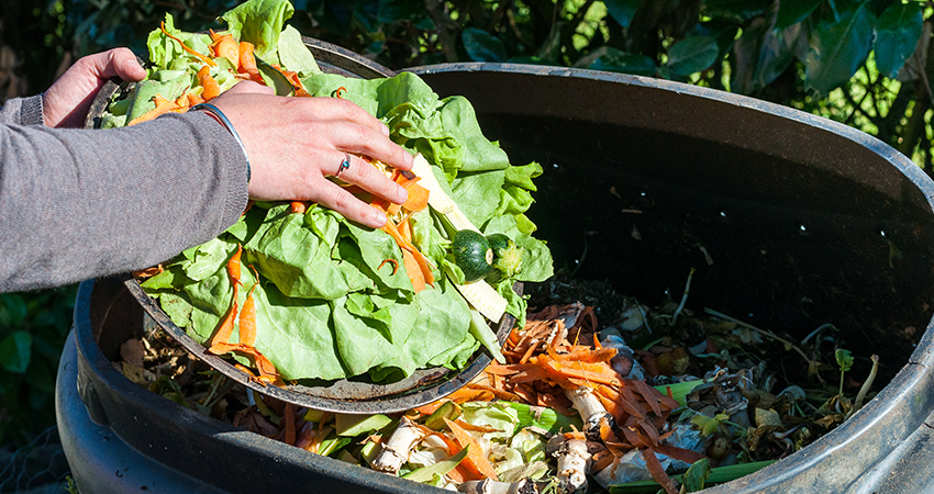 13 TIPS ON REDUCING FOOD WASTE